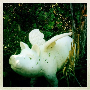 Lovely molded plastic pig looking over my weeds. Thanks Monica Farrar.